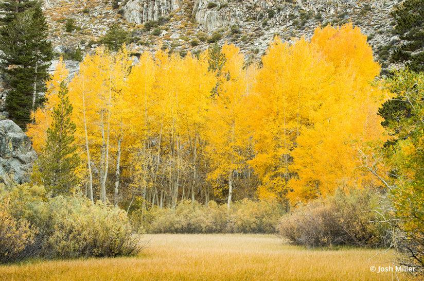 Fall Color Eastern Sierra