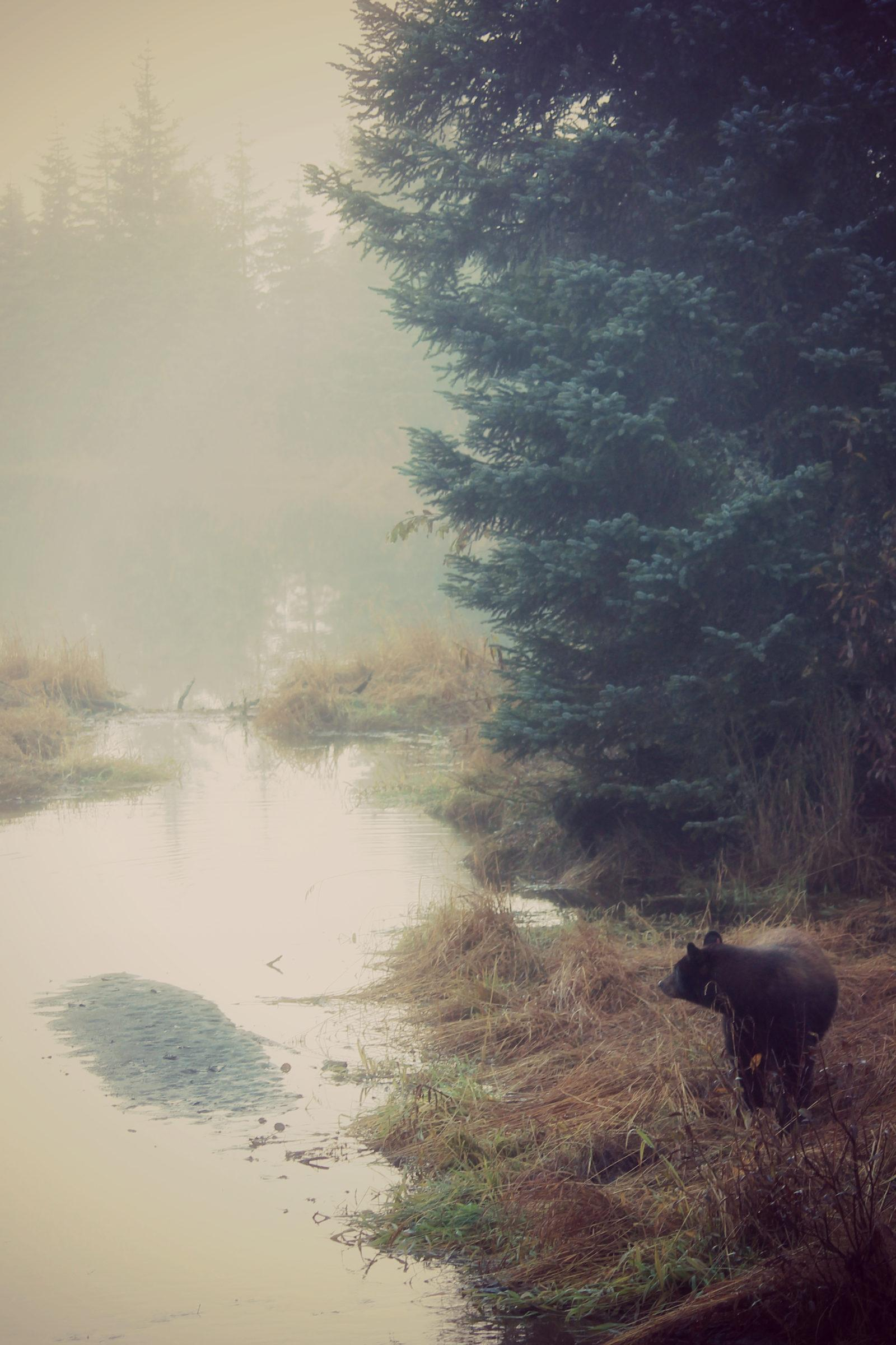Today's Photo Of The Day is Good Morning Bear by Anna Cramer. Location: Juneau, Alaska.