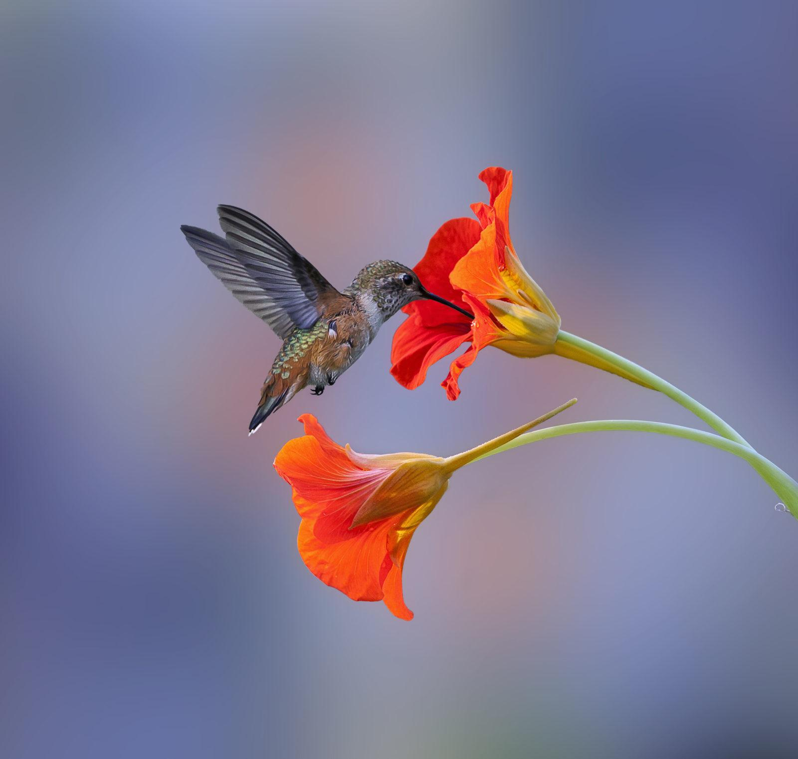 """Congratulations to Denis Dessoliers for winning the recent Beautiful Bokeh Assignment with the image, """"A Little Bird."""""""