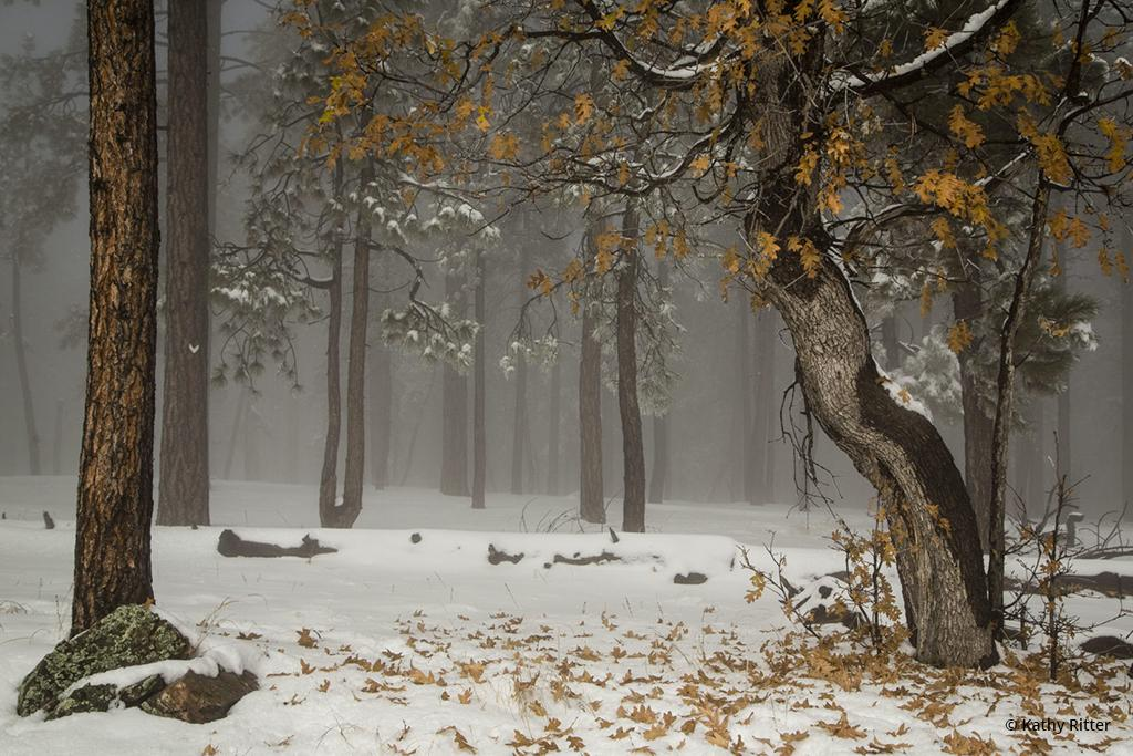"""Today's Photo Of The Day is """"Fog Oak"""" by Kathy Ritter. Location: Happy Jack, Arizona."""