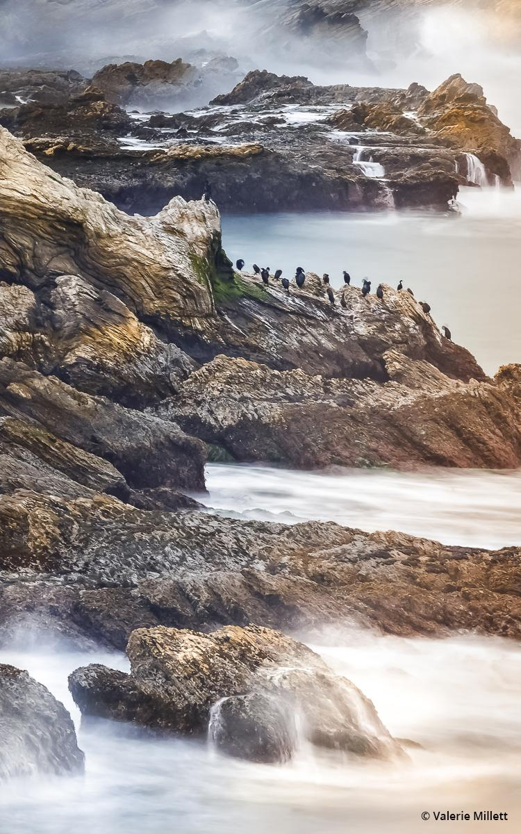 Today's Photo Of The Day is California Coast by Valerie Millett. Location: Big Sur, CA.