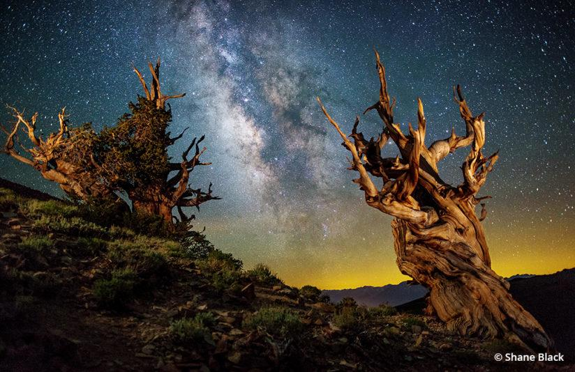 Night time-lapse photography - Bristlecone