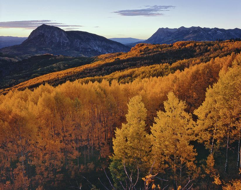 Colorado Fall Color - Gunnison National Forest