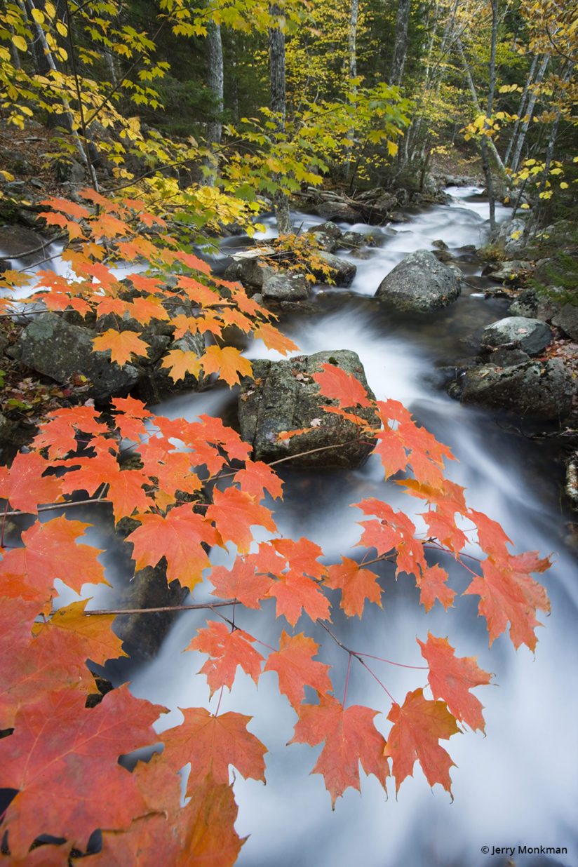 Autumn In The Northeast - Acadia National Park