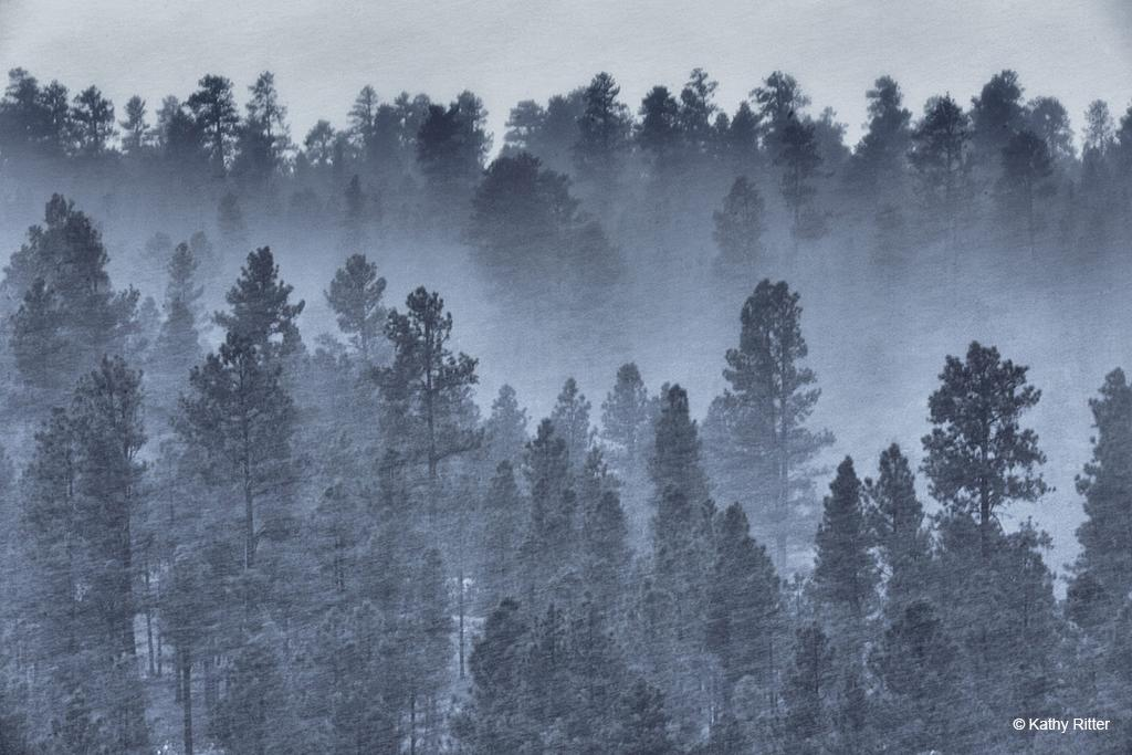 Today's Photo Of The Day is Swift Snow by Kathy Ritter. Location: Payson, Arizona.
