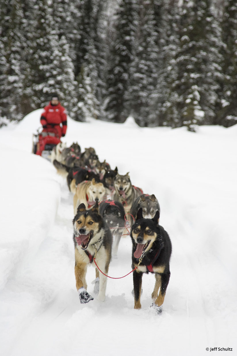 Iditarod by Jeff Schultz