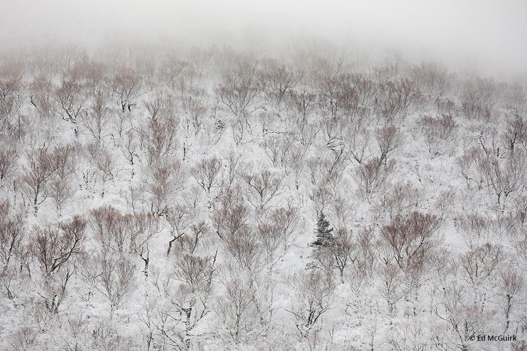Today's Photo Of The Day is Cannon Mountain Tree Patterns by Ed McGuirk. Location: Franconia Notch State Park, New Hampshire.