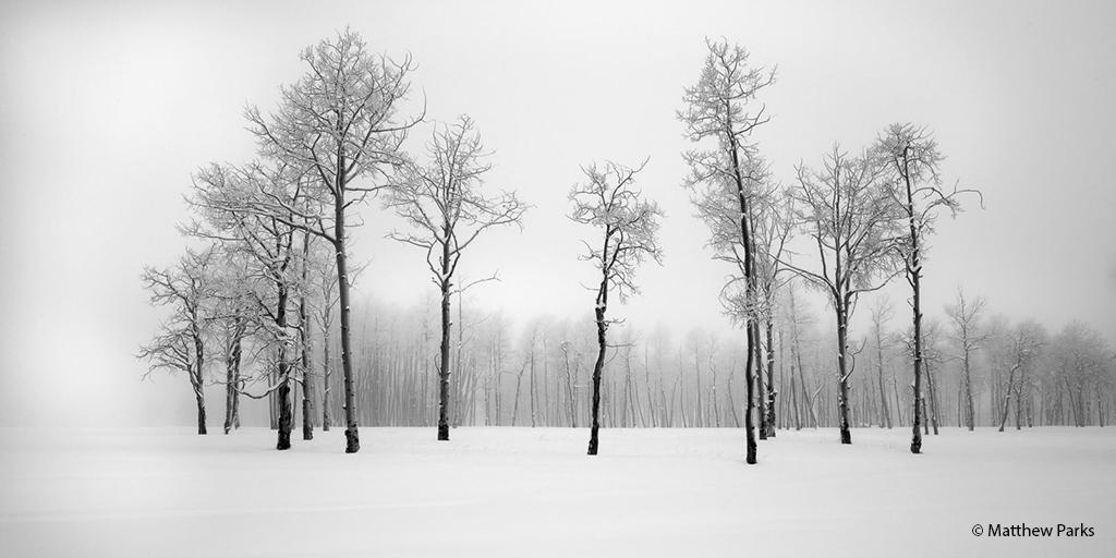 "Today's Photo Of The Day is ""Winter Grove"" by Matthew Parks. Location: Ridgway, Colorado."