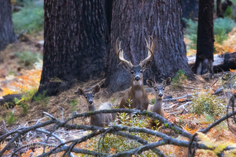 Autumn in the Yosemite High Country