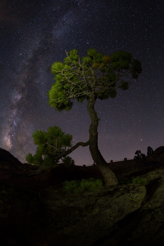 Pine tree and Milky Way