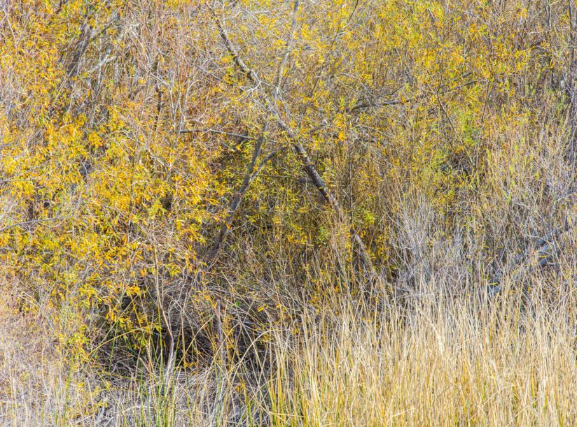 Willows and Grass II