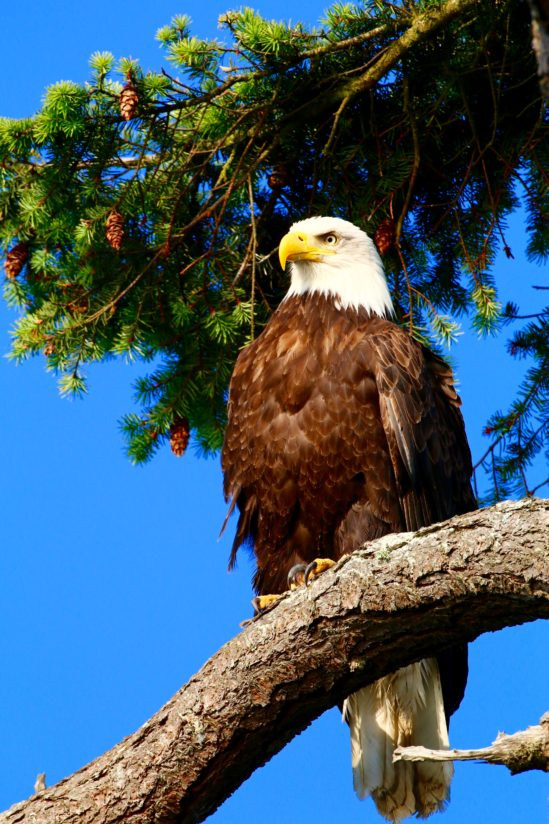 Majestic Symbol of Freedom