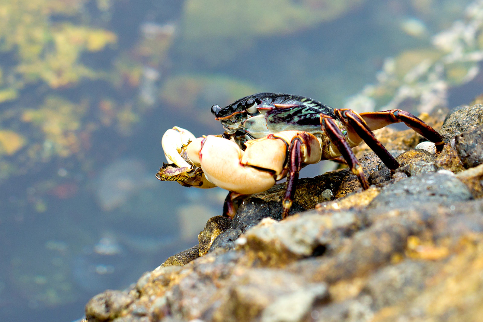 crab - Outdoor Photographer: www.outdoorphotographer.com/photo-contests/great-outdoors/entry...