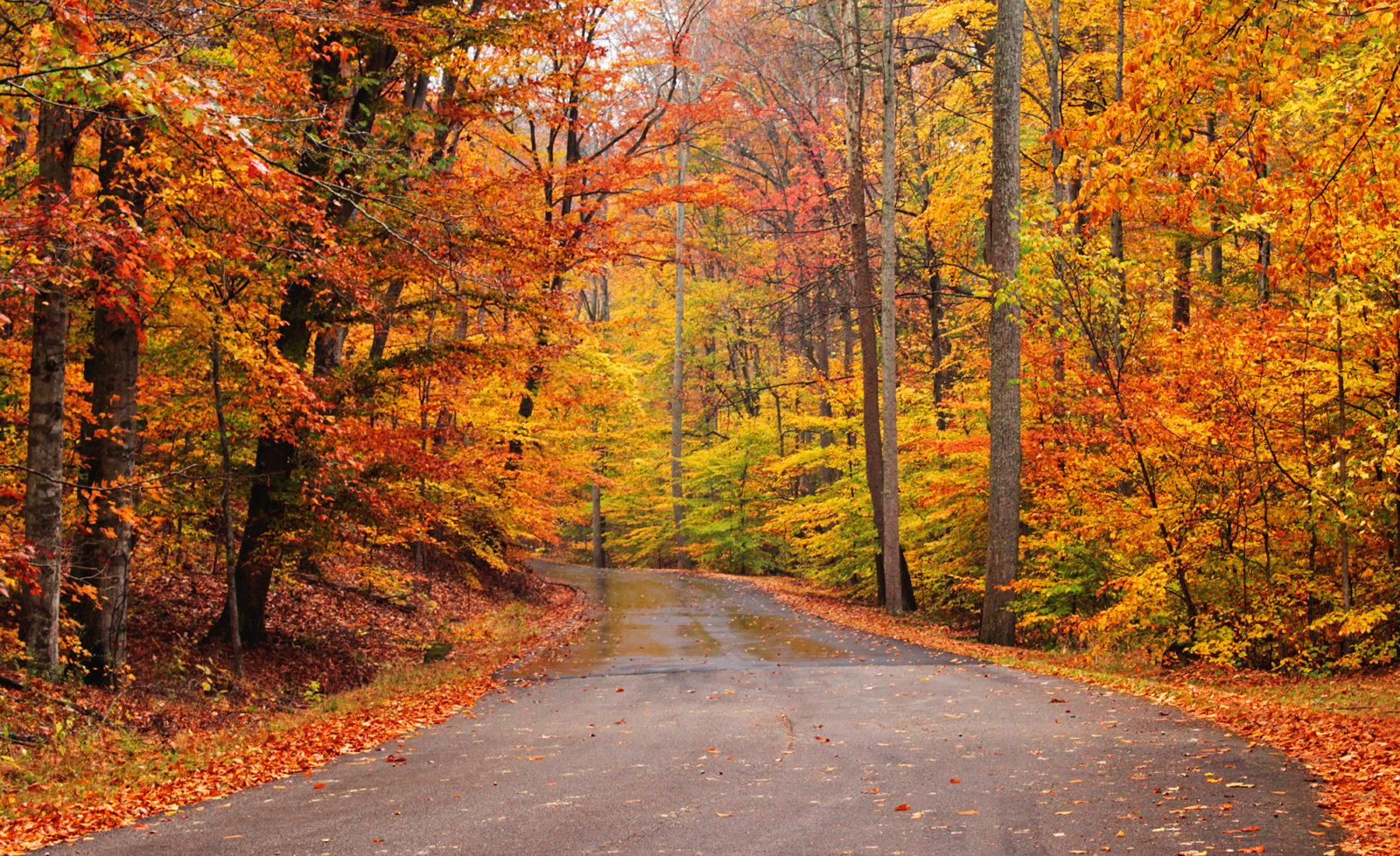 Autumn Roads - Outdoor Photographer: www.outdoorphotographer.com/photo-contests/great-outdoors/entry...